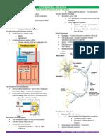 BIOLOGY-N.-System.docx