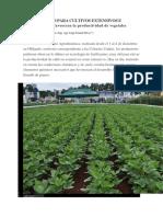 Fertilizantes Para Cultivos Extensivos e Intensivos