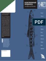 В.Н. Леман, Е.В. Лесин - Иллюстрированный Определитель Лососеобразных Рыб Камчатки
