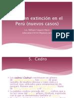 floraenextincinenelpernuevos-140821171216-phpapp02.pdf