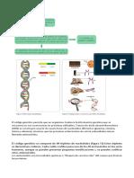 Genética - Las Mutaciones