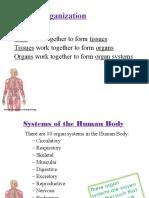 bodysystems-151210030631.pdf