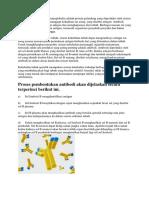 Antibodi.docx