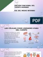 Organización Funcional Del Cuerpo Humano (1)
