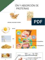 Abrosción de Peptidos