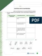 caracteristicas invrtebrados.pdf