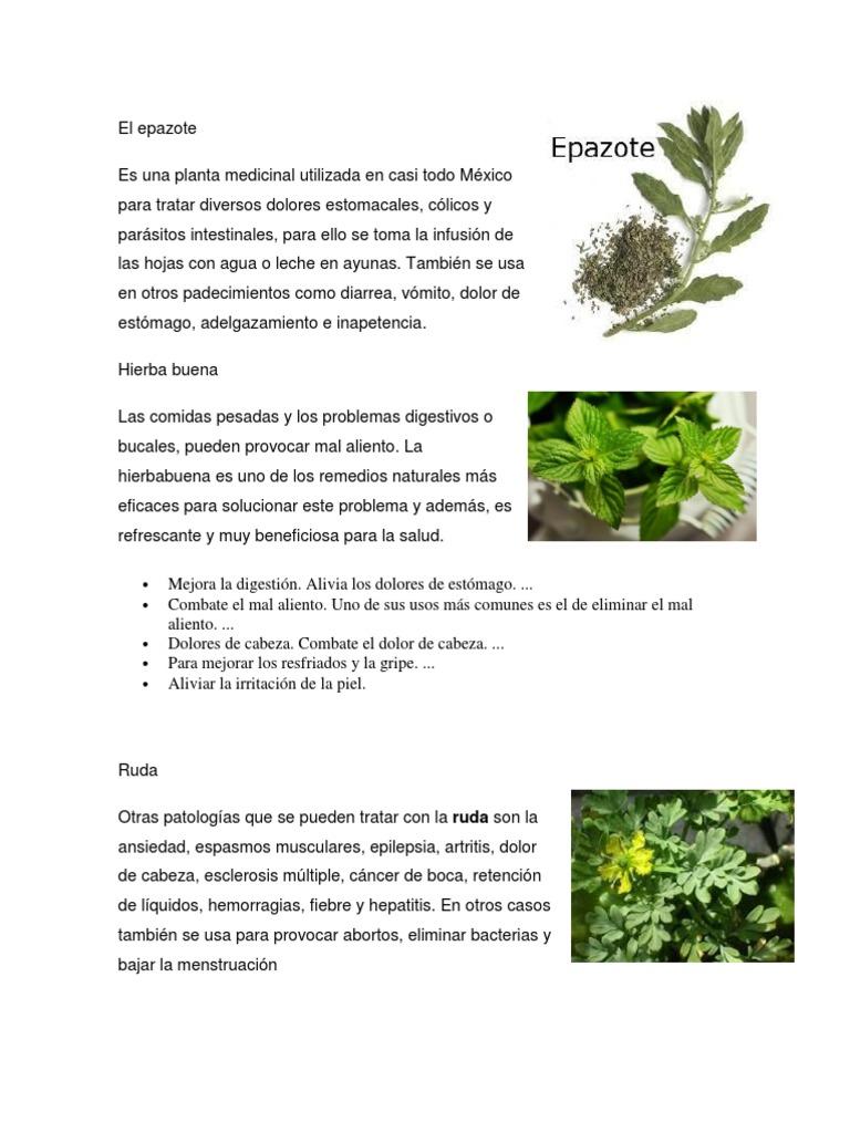 plantas medicinales retención de líquidos