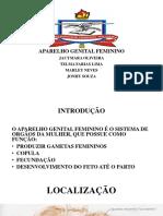 Seminario de Anatomia Sistema Genital Feminino