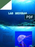 las medusas