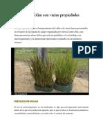 Fertilizante Foliar Con Varias Propiedades