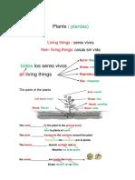 tema de las plantas en ingles