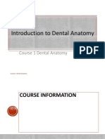 1. 2019 Introduction to Dental Anatomy