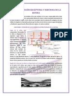 Funcion Receptora y Nerviosa de La-Retina.docx
