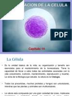 14. Célula