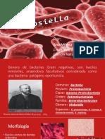 Generalidades de Klebsiella (bacteria)