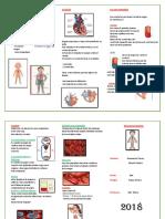 Aparatado circulatorio