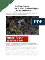 Cuánto Puede Tardar en Regenerarse La Selva Consumida Por Los Incendios Del Amazonas