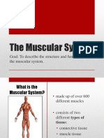 Muscular_System-final.pptx