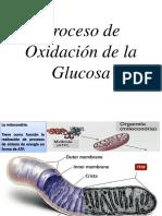 Proceso de Oxidación de glucosa
