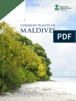 Common plants of maldives