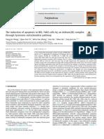 Lysosome Mitochondriapathway Apoptosis