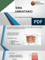 Sistema Tegumentario Uwu