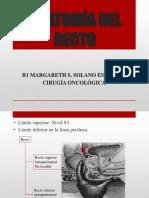 Anatomía Del Recto