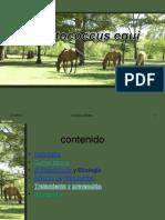 actividad-160527214532 (1).pdf