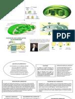 monografia cloroplasto