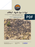 Wildebeest Migration Safari SEASON 2.pdf
