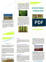 ecosistema-terrestre2 (1)