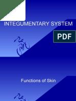 4. Integumentary System