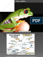 anfibios.ppt