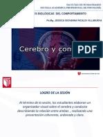 SESION 1- CEREBRO Y CONDUCTA.pptx