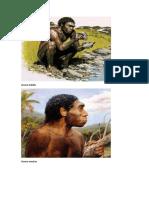 Homo habilis.docx