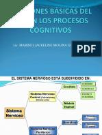 3. SISTEMA NERVIOSO COMPLETO (1)-convertido.pdf