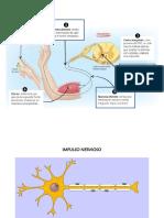 Cuidados Sistema Nervioso