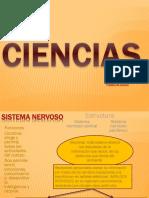 Sistemas Nervioso Examen
