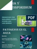 Giardia y Cryptosporidium