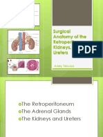 anatomi urogenital
