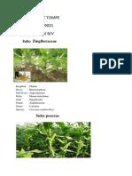 Klasifikasi Botani tingkat tinggi