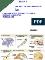 Tema2 Organizacion Funcional Sistema Nervioso (1)