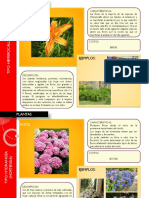 Catálogo de Plantas (Arq. Israel Romo Jáuregui)