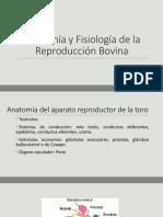 Anatomía y Fisiología de la Reproducción Bovina (2).pptx