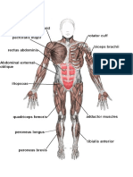 040 Muscles of the Body