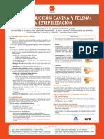 reproduccion_canina_felina_a4.pdf