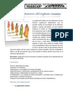 -Administracion-Del-Imperio-Incaico.docx
