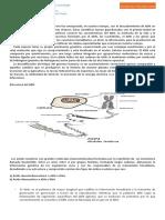 GUÍA DE APRENDIZAJE   1 ADN ( 4° medio).docx