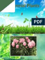 perinial plants