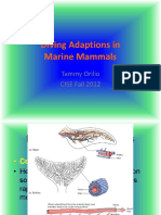 orillo_diving_adaptations_2_1.pptx